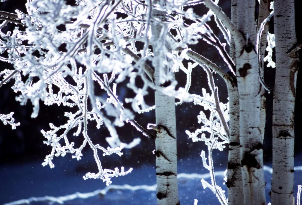 Zima podle tradiční čínské medicíny